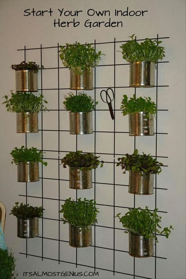 Indoor Herb Garden It Allows Plants To Extend Upward Rather Than Grow Along The Surface