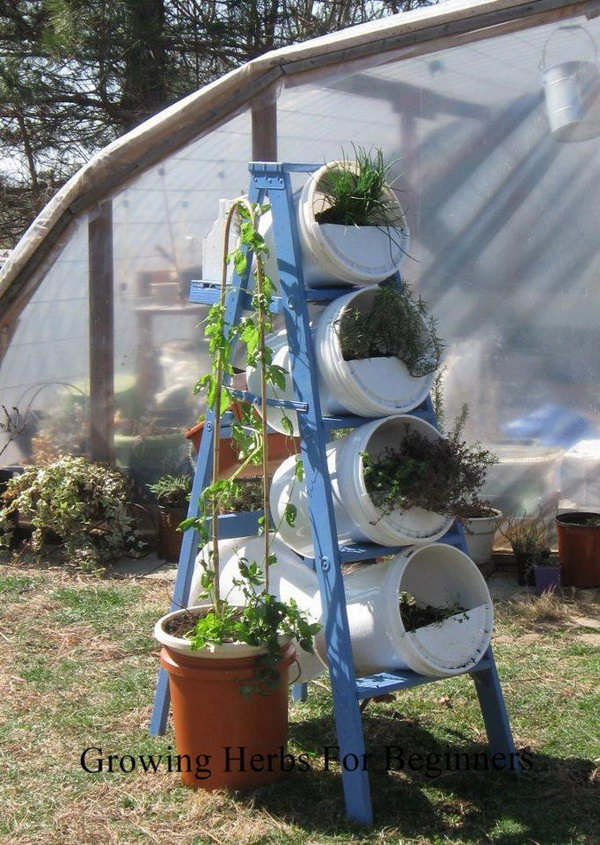 Buckets and ladder make vertical garden. It allows plants to extend upward rather than grow along the surface of the garden. Doesn't take a lot of space and look so beautiful at the same time.