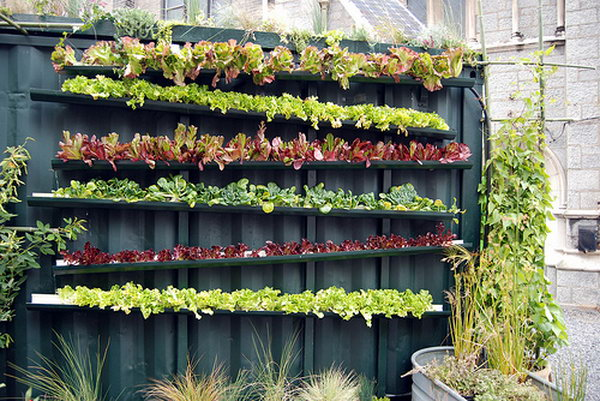 Real live vertical farm. It allows plants to extend upward rather than grow along the surface of the garden. Doesn't take a lot of space and look so beautiful at the same time.