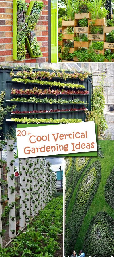 All These Cool Vertical Gardening Ideas Allow Plants To Extend Upward  Rather Than Grow Along The