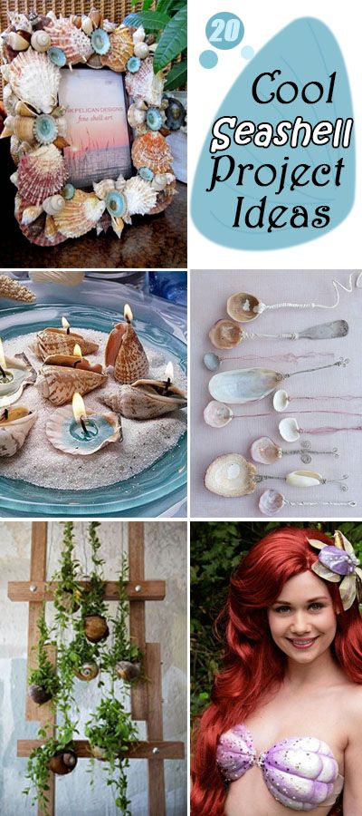 Cool Seashell Projects & Ideas!
