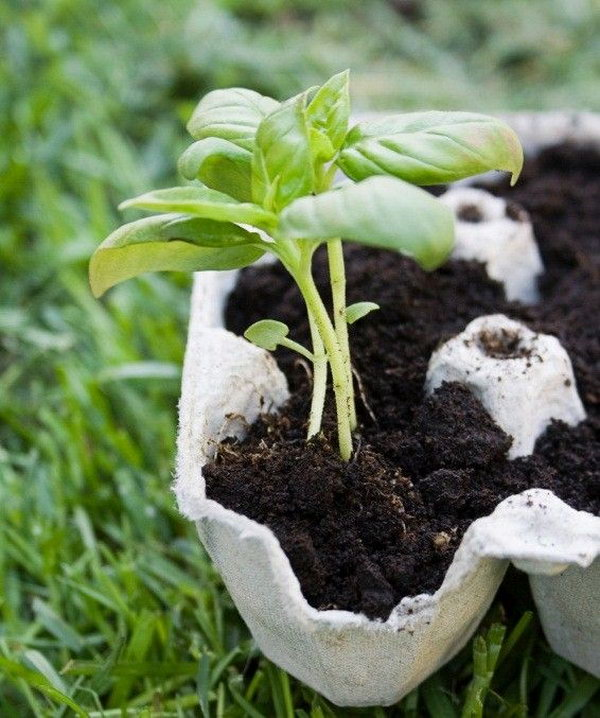 Used egg cartons are excellent for tiny planters which can bring you fresher air.