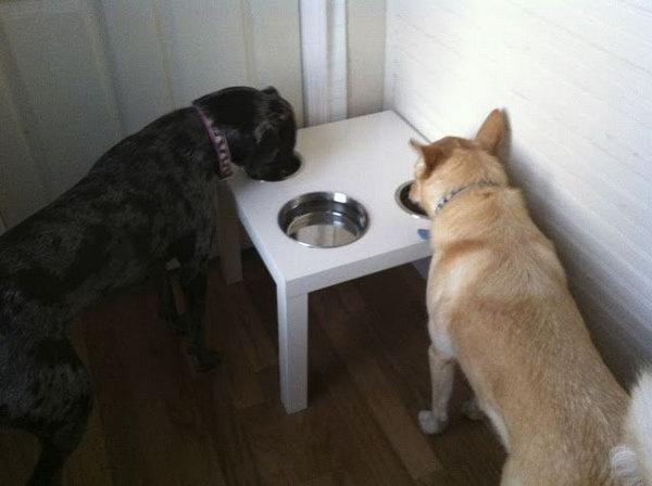 DIY Dog Dinner Table. Dogs often push their bowls around the kitchen floor when they eat. You can buy a LACK side table from IKEA and cut the properly sized holes in which to place our dog's food and water bowls. It would be much nicer to have them stay in one place. See more