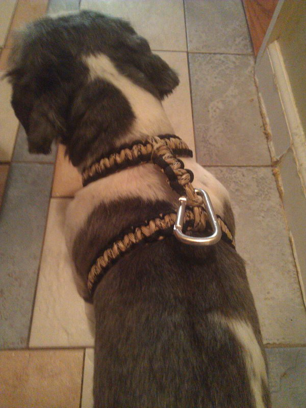 DIY Paracord Dog Harness