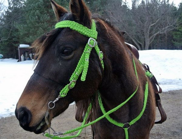 Horse Halter and Bridle