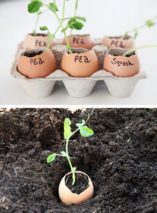 Eggshells Make the Perfect Indoor Seedling Starters