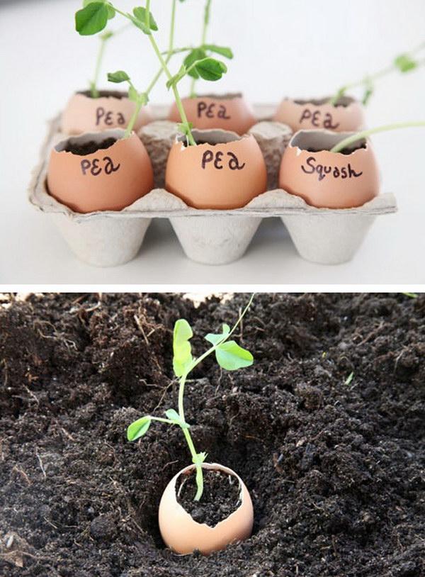 Eggshells Make the Perfect Indoor Seedling Starters