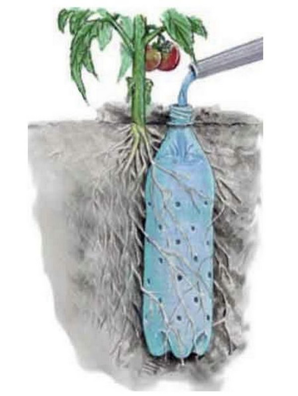 Use Plastic Bottles with Holes to Create a Worry-Free Self-Watering System