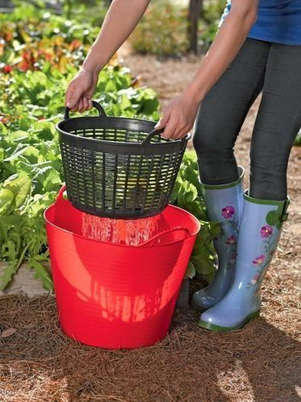 Rinse Veggies Right in the Garden and Then Re-Use the Water on the Plants