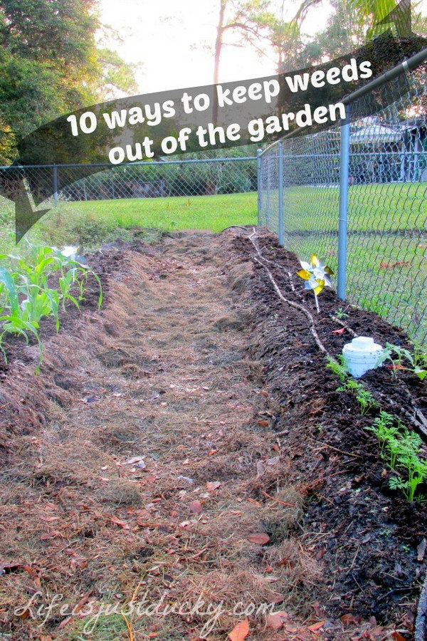 35+ Creative Garden Hacks U0026 Tips That Every Gardener Should Know   Hative
