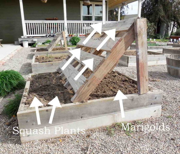 Pallet Vegetable Garden Beds