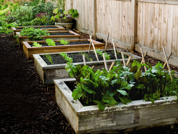DIY Wooden Raised Garden Bed.
