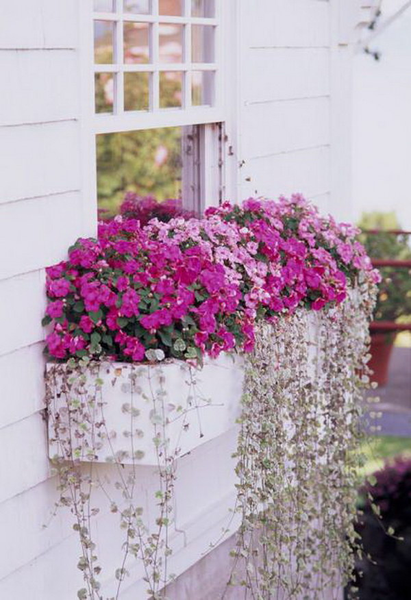 Window Box Plants For Shady Spots.