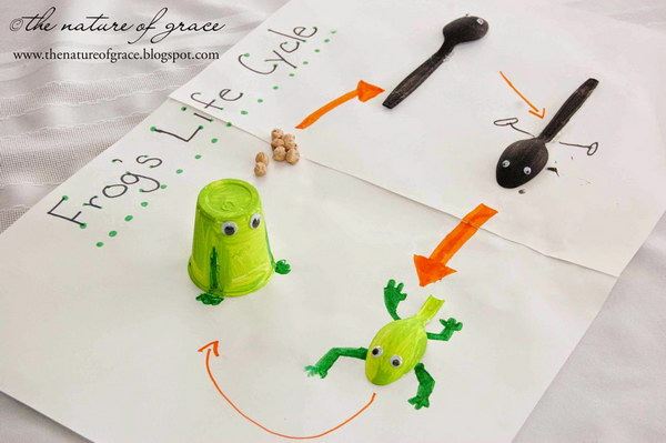 Frog Life Cycle For Kids Worksheet Life Cycle Projects fo...
