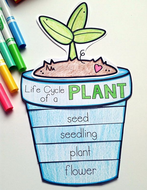 Life Cycle Projects for Kids - Hative