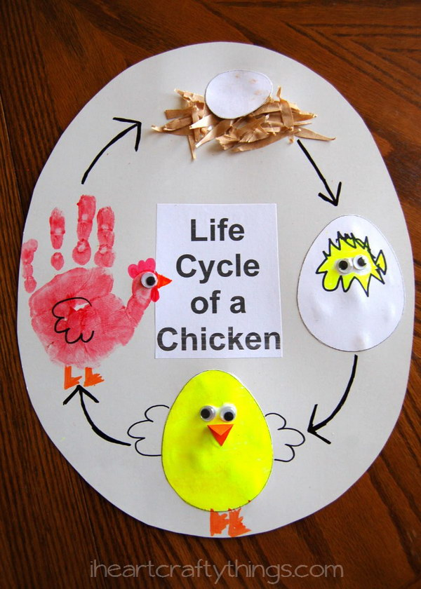 Cute Craft for Life Cycle Of A Chicken.