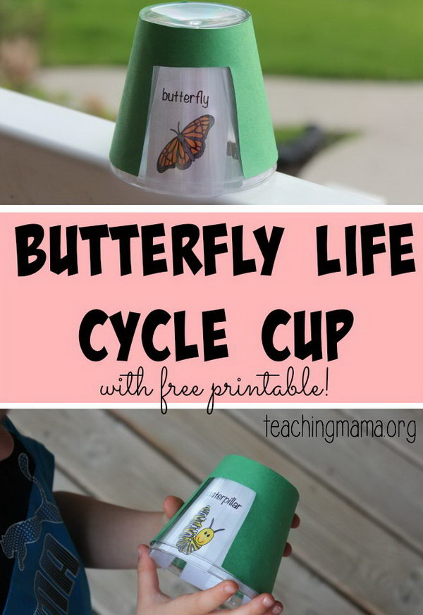 Butterfly Life Cycle Cup.