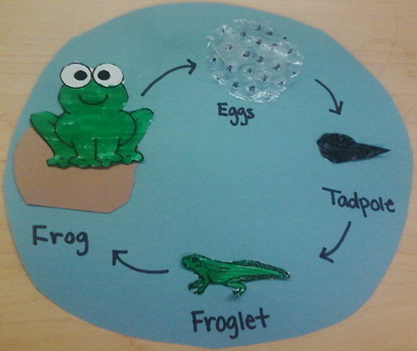 Life Cycle of a Frog Lesson Plan and Activity.