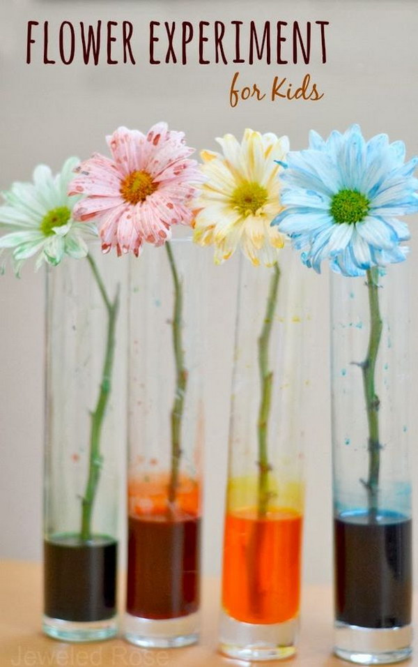 Flower experiment for kids: a fun & magical way for kids to learn about flowers.