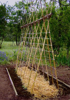 This Is Not Exactly Your Traditional Bamboo Trellis. It Has Some Hay At The  Base, From Which Two Tall Grid Structures Rise. The Two Structures Are  Connected ...