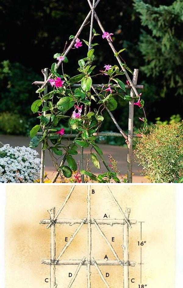DIY Rustic Trellis Using Branches.