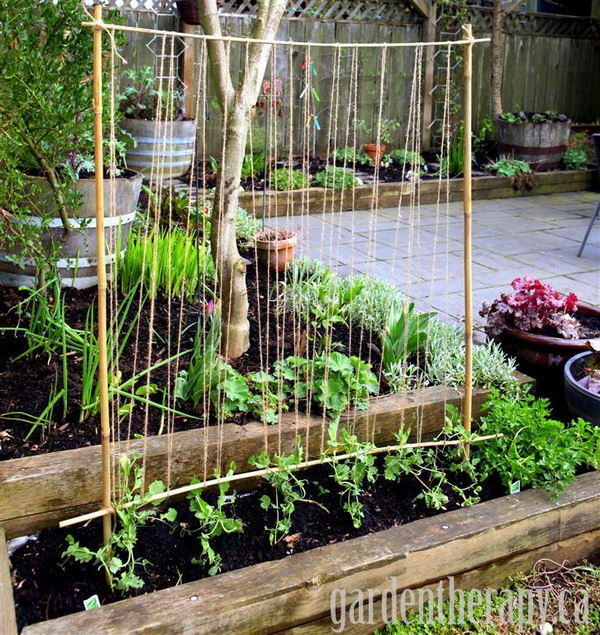 Diy Garden Part - 27: DIY Simple Pea Trellis