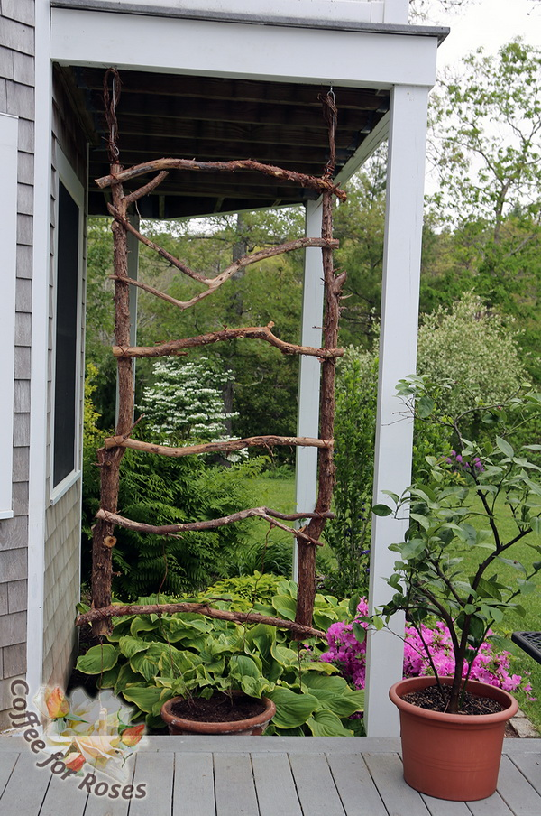 DIY Trellis Made of Branches.