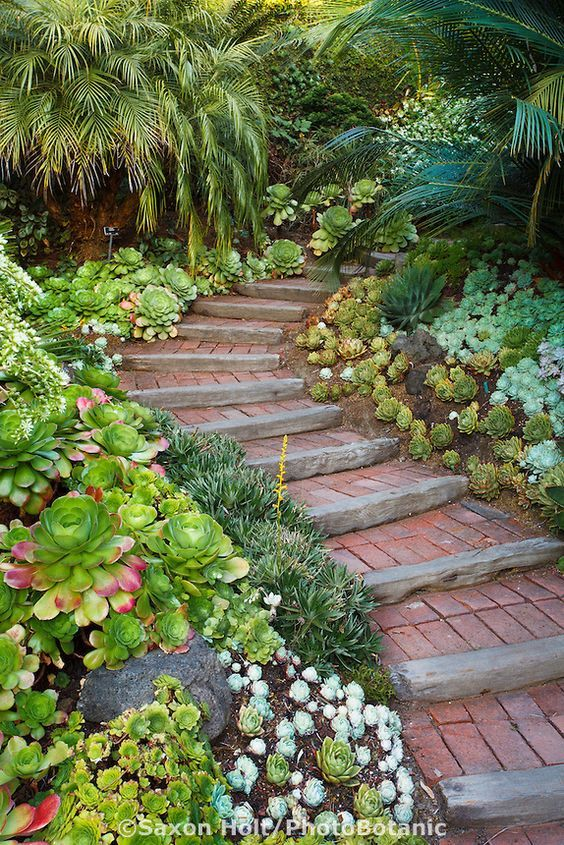 Steps Going Up Walkway Into California Garden With Succulent Groundcover Mix