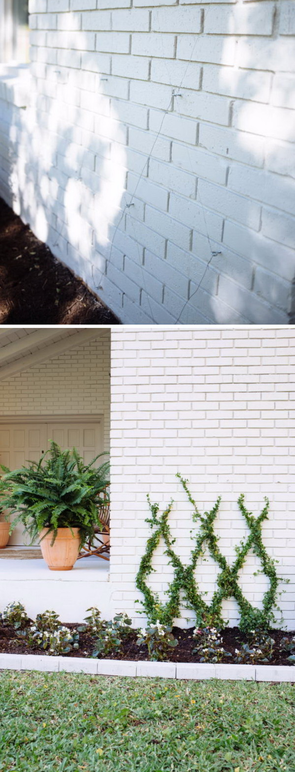 Spruce Up Exterior Wall with Climbing Plants.