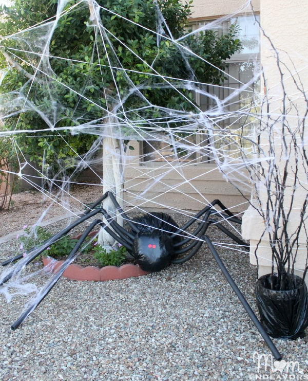Trash Bag Spiders.