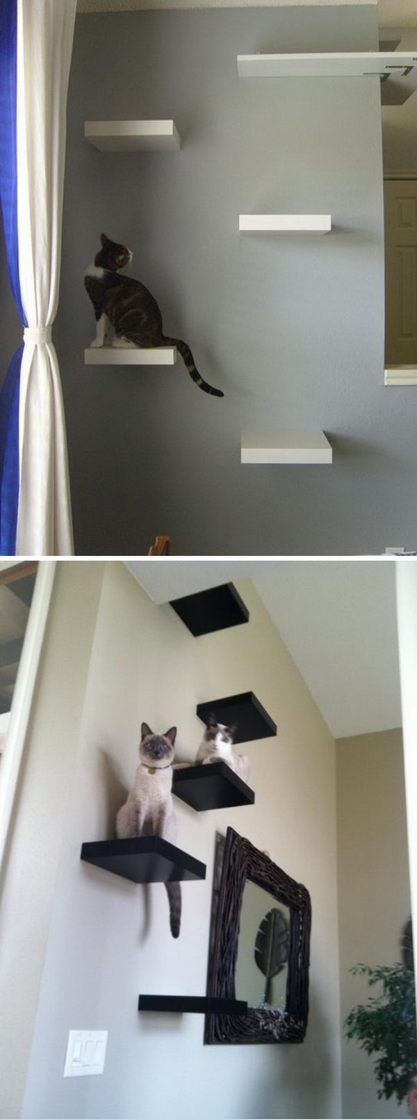 Lovely Cat Shelves.